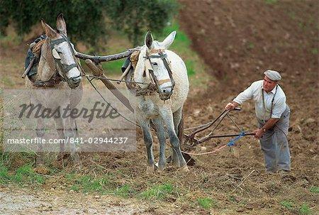 Labour avec des ânes, près de Olvera, Cádiz, Andalousie, Espagne, Europe