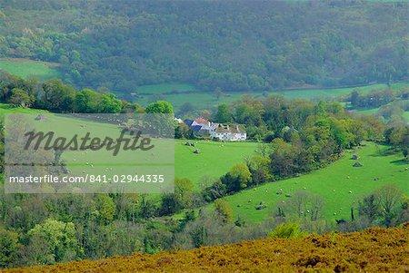 Campagne près de Bovey Tracey, Devon, England, UK