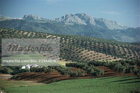 Paysage près de Malaga, Andalousie, Espagne, Europe
