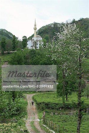 Les plantations de thé et de fleurs d'amandier en région côtière, Trabzon zone, Anatolie, Turquie, Asie mineure, Eurasie