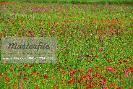 Wild flowers including poppies on Majorca, Balearic Islands, Spain, Europe