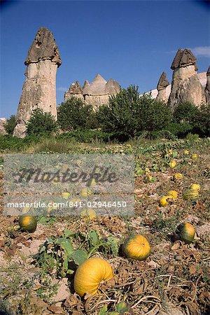 Citrouilles et melons dans le vignoble de pachas, à Zelve en Cappadoce, Anatolie, Turquie, Asie mineure, Eurasie