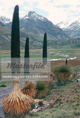 Parc National de CATaC, Andes montagnes, Pérou, Amérique du Sud
