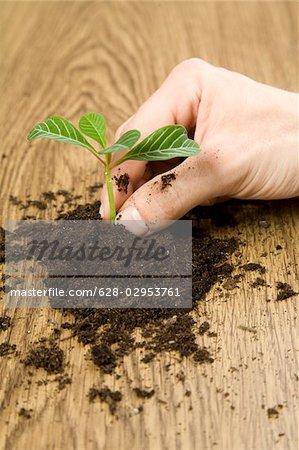 Main avec des semis, Allemagne