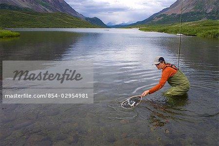 Fly fisherwoman nets wild Arctic grayling in Landmark Gap Lake a large alpine lake in the Alaska Range Alaska southcentral summer