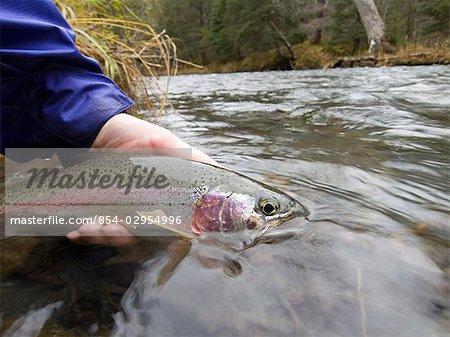 Close up of person holding Rainbow trout on Ptarmigan Creek Kenai Peninsula Alaska fall