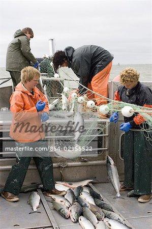 Pêcheur commercial démêler les saumons rouges d'un filet maillant à bord d'un bateau de pêche commerciale baie de Bristol en Alaska