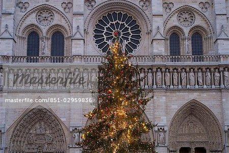 Arbre de Noël à l'extérieur de la cathédrale de Notre Dame à l'aube, Paris, France