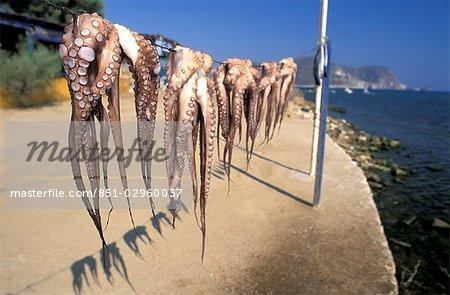 Poulpe sécher au soleil, Antiparos, Iles Grecques