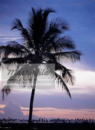 Silhouette of palm tree at Chocas near Ilha de Mocambique,Mozambique.