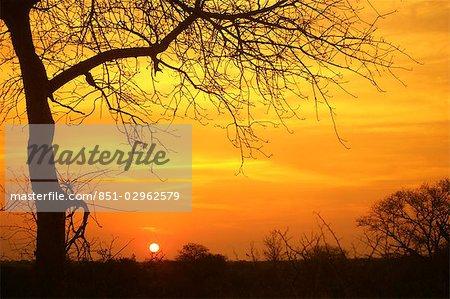 Game Drive Kruger Park, Afrique du Sud