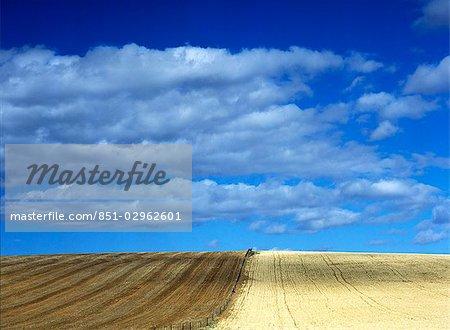 Recherche le long de la clôture dans les champs près de Swellendam, Western Cape, Afrique du Sud.