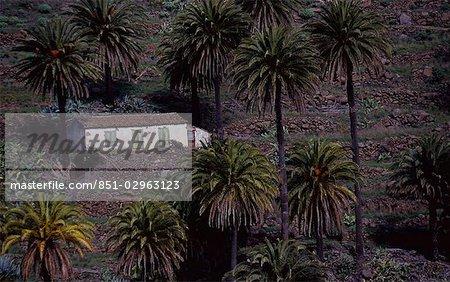 House amongst palm trees,La Gomero,Canary Islands,Spain
