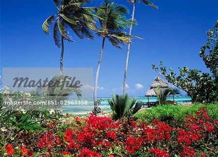 Face à la mer, Paje, Zanzibar, Tanzanie