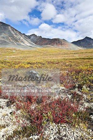 Wiese und Tombstone Mountains, Tombstone Territorial Park, Yukon, Kanada