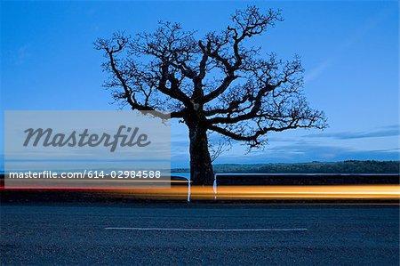 Road and tree near tarbert