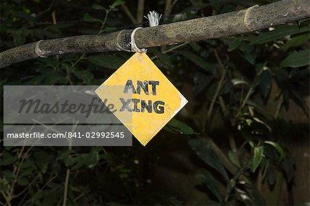 Signer afin que vous ne marchez pas sur un flot de feuille fraise fourmis, Monteverde, Costa Rica, Amérique centrale