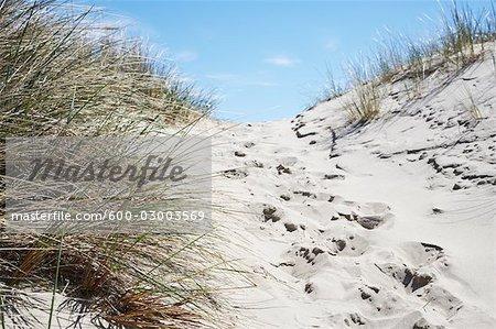 Empreintes de pas sur le chemin d'accès au sable, Strandby, Jylland, Danemark