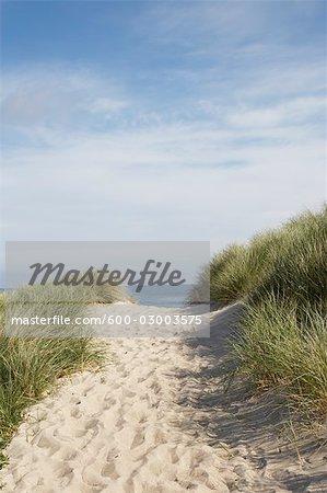 Chemin d'accès dans le sable à la plage, Vorupoer, Jylland, Danemark
