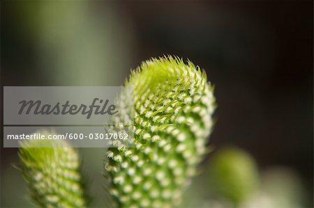 Cactus, jardins botaniques de Brooklyn, Brooklyn, New York City, New York, États-Unis