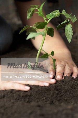 Kind Einpflanzen Tomaten Sämling