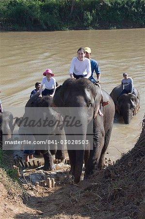 Les éléphants à l'Anantara Golden Triangle Resort, Sop Ruak, Golden Triangle, Thaïlande, Asie du sud-est, Asie