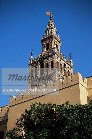La Giralda et orange arbres, Séville, Andalousie, Espagne, Europe