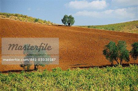 Vignobles près de Montilla, Andalousie, Espagne, Europe