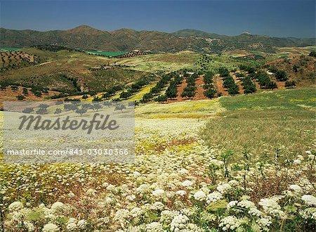 Paysage près de Velez Malaga, Andalousie, Espagne, Europe