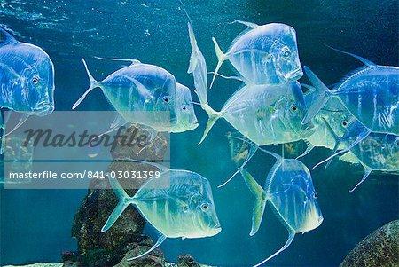 Aquarium, Oceanographic Institute, Monaco-Veille, Monaco, Europe