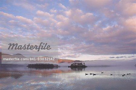 Kanadagans, Derwent Water, Lake District-Nationalpark, Cumbria, England, Vereinigtes Königreich, Europa