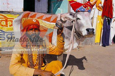 Hindu holy man with five legged cow, Pushkar, Rajasthan state, India, Asia