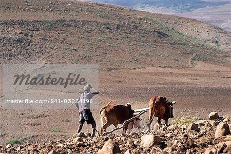 Man ploughing with animals on rough ground,Lasta Valley,Wollo region,Ethiopia,Africa