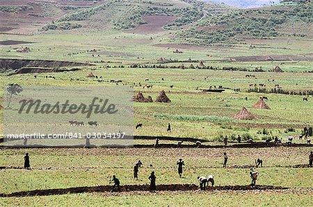 Working on farmland,near Sentebe,Choa region,Ethiopia,Africa