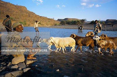 Shepherds and flock crossing river,Terari Wenz,Wollo region,Ethiopia,Africa