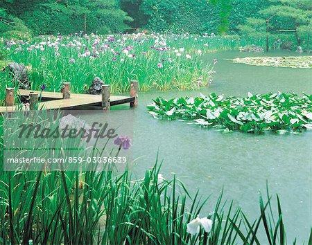 Fleurs qui poussent dans un lac