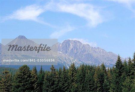 Pins de montagne, montagne Vysoké Tatry, Vysoke Tatry, Slovaquie, Europe