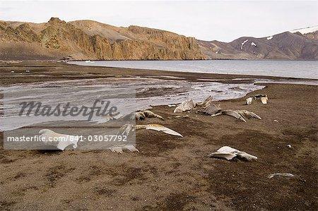 Téléphone Bay, île de la déception, les îles Shetland du Sud, Antarctique, régions polaires