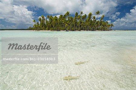 Sharks, Blue Lagoon, Rangiroa, Tuamotu Archipelago, French Polynesia, Pacific Islands, Pacific