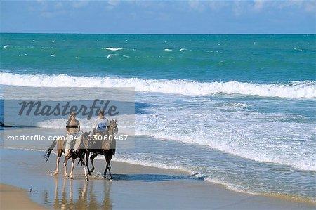 Chevaux de selle de couple sur la plage, Tibau do Sul, Natal, Rio Grande do Norte État au Brésil, en Amérique du Sud