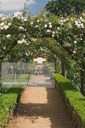 Arches of roses, Mottisfont Abbey Garden, Hampshire, England, United Kingdom, Europe