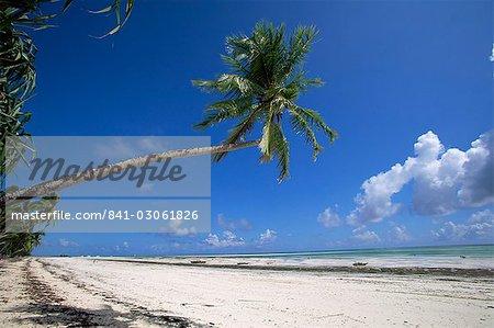 Palm tree, Kiwengwa beach, Zanzibar, Tanzania, East Africa, Africa