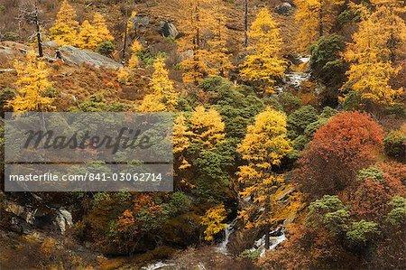 Automne couleurs, réserve naturelle de Yading, Province du Sichuan, Chine, Asie