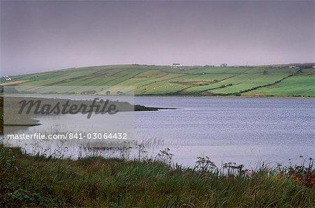 Fleurs et brume, lac de Carrowmore, comté de Mayo, Connacht, Irlande, Europe
