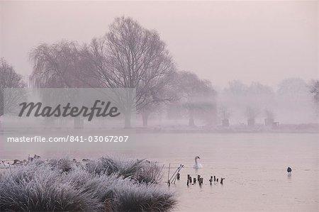 Nebligen Morgendämmerung über dem Teich Heron, Bushy Park, London, England, Vereinigtes Königreich, Europa
