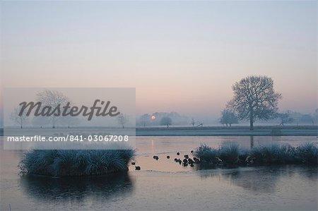 Nebligen Sonnenaufgang über dem Teich Heron, Bushy Park, London, England, Vereinigtes Königreich, Europa