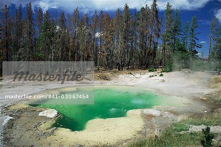 Emerald Spring, un bassin chaud volcanique à Norris Geyser Basin, la couleur verte causée par l'eau bleue et jaune soufre, Yellowstone National Park, patrimoine mondial de l'UNESCO, Wyoming, États-Unis d'Amérique (États-Unis d'Amérique), Amérique du Nord