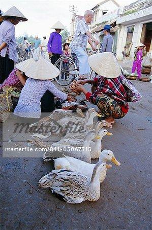 Canards avec leurs pieds attachés à vendre dans le secteur du marché, Hoi An, Vietnam, Indochine, l'Asie du sud-est, Asie