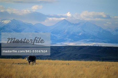 Vers l'ouest vers les montagnes Rocheuses Big Timber, comté de Sweet Grass, sud du Montana, Montana, États-Unis d'Amérique, Amérique du Nord