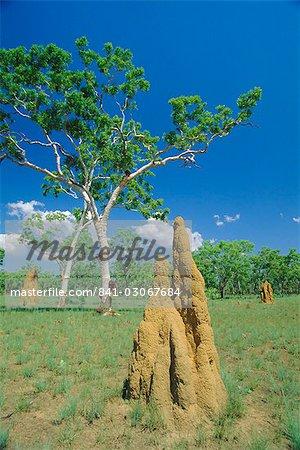 Les nids de termites énorme ou « cathédrales » à « Top End », Parc National de Kakadu, territoire du Nord, Australie